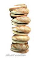 Pulsera de conchas sobre base de madera PUCON2 para comprar al por mayor o detalle  en la categoría de Outlet Hippie Étnico Alternativo.