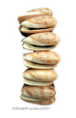 Pulsera de conchas sobre base de madera Comprar - Venta Mayorista y detalle